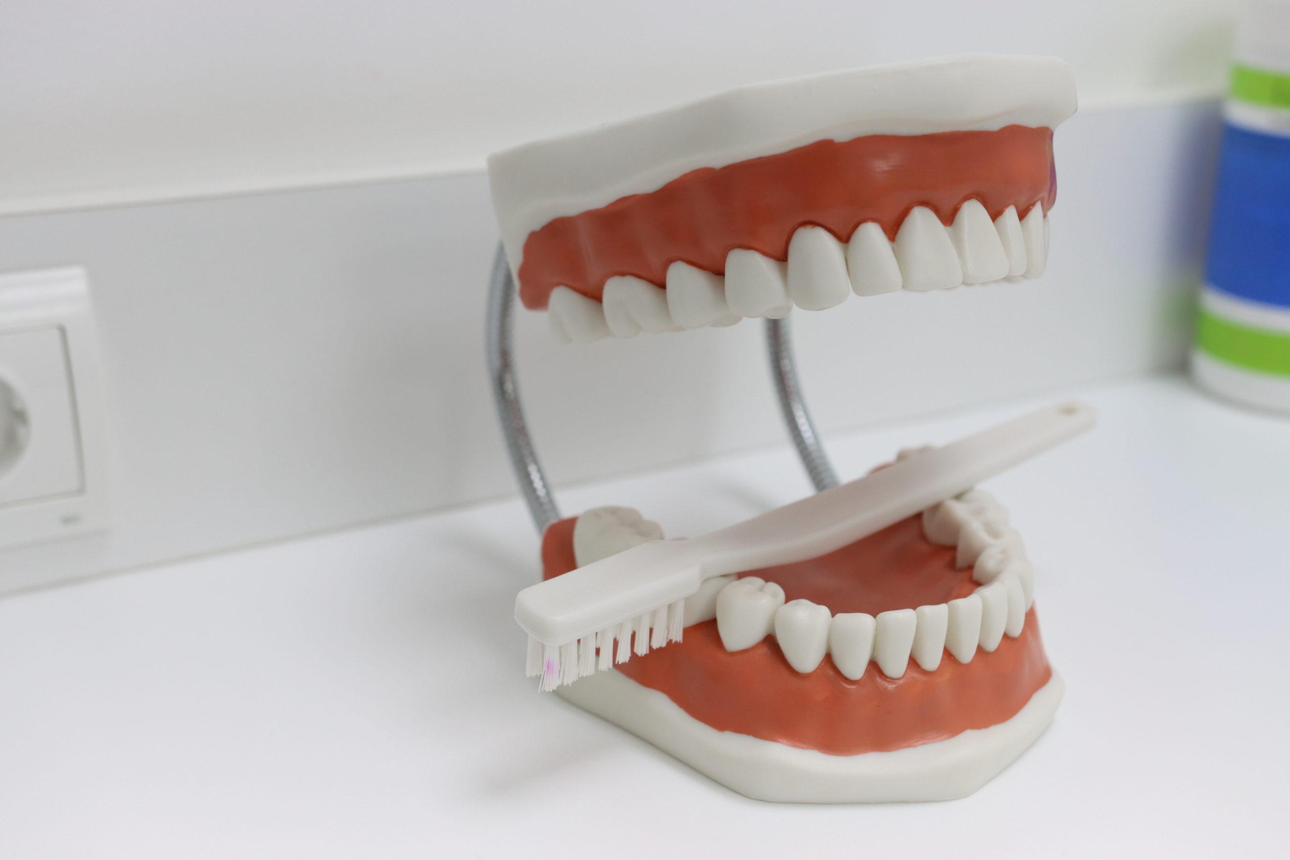 Articulador dentista